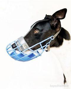Greyhound kennelkoppa
