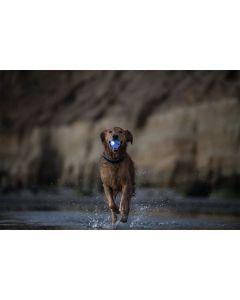 Planet Dog Hehkuva LED pallo